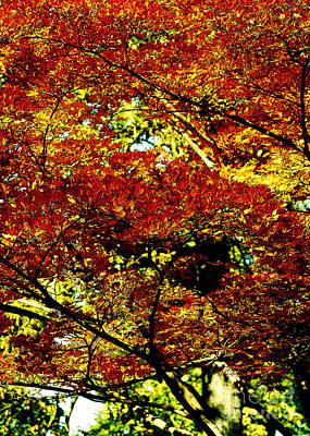 Photograph - Foliage Dream Solarisation by Rudi Prott