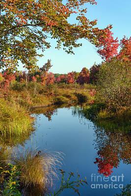Photograph - Foliage II by Sharon Seaward