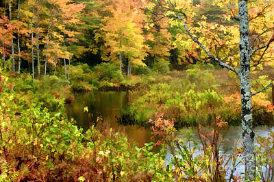 Photograph - Foliage In Nh by Sharon Seaward