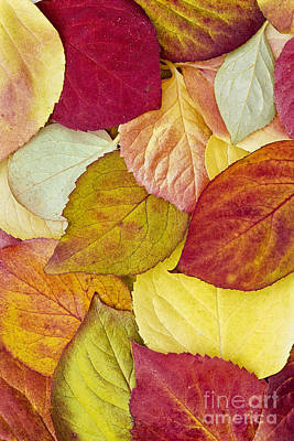Photograph - Foliage Quilt by Alan L Graham