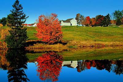 Photograph - Foliage Reflected by Caroline Stella