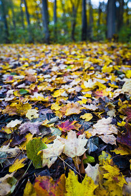 Fall Photograph - Foliage by Sebastian Musial