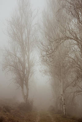 Follow It And Know Your Forests Print by Guido Montanes Castillo