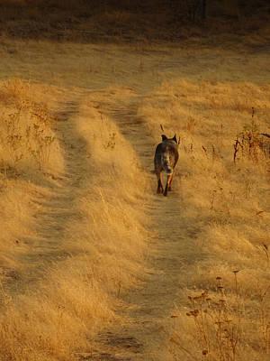 Photograph - Follow Me by Jacqueline  DiAnne Wasson