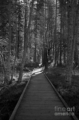 Portrate Photograph - Follow The Path by Erika Hersh