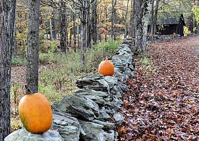 Photograph - Follow The Pumpkin Trail by Janice Drew