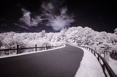 Photograph - Infrared Through The Trees by Crystal Wightman