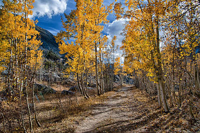 Mountain Royalty-Free and Rights-Managed Images - Follow the Yellow Tree Road by Cat Connor