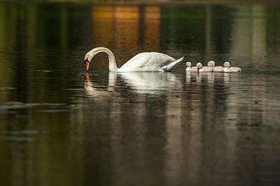 Photograph - Following  Mom by Paul Johnson