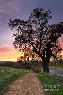 Following The Indian Trail To Where The Sun Dies Mt Diablo 2013 Art Print by Benjamin Race - Arc of Light Photography