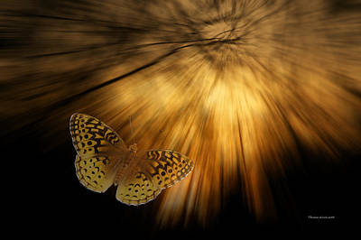 Following The Light Yellow Butterfly Art Print by Thomas Woolworth