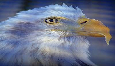 Photograph - Fontana Eagle Ripple by Bonfire Photography