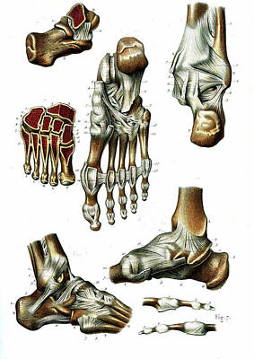 Foot Anatomy Print by Collection Abecasis