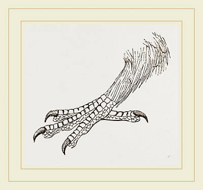 Hornbill Drawing - Foot Of Rhinoceros Hornbill by Litz Collection