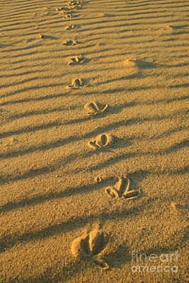 Photograph - Foot Print In The Sand by Crystal Magee