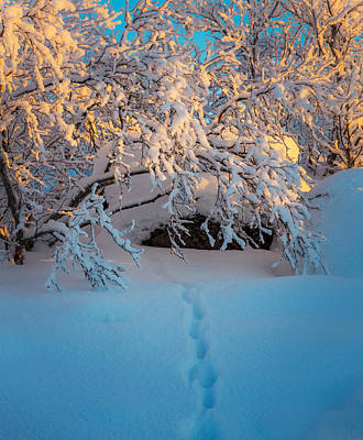 Cold Temperature Photograph - Foot Prints And Trees In The Frozen by Panoramic Images