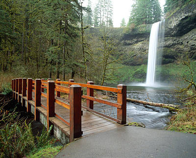 Silver River State Park Photograph - Footbridge Across A River by Panoramic Images