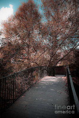Photograph - Footbridge In Soft Autumn by Peter Noyce