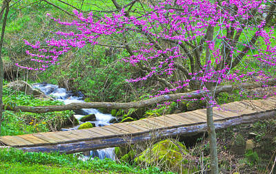 Photograph - Footbridge Under The Redbud Tree by Alan Lenk