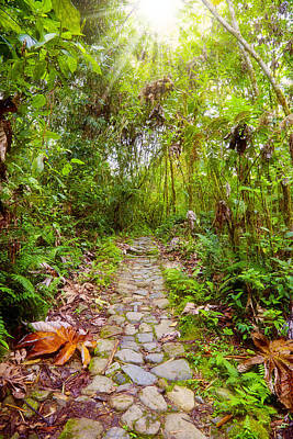 Photograph - Footpath In The Jungle by Alexey Stiop