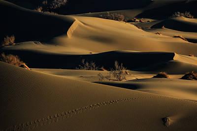 Bushes Photograph - Footprints by Babak Mehrafshar (bob)