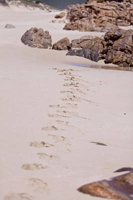 Photograph - Footprints In The Sand by Michelle Wrighton