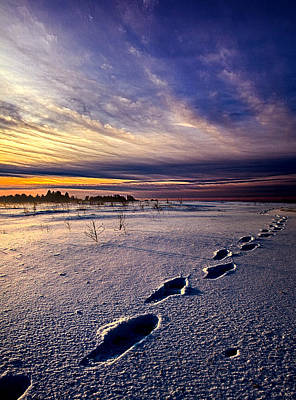 Red Leaves Snow Wall Art - Photograph - Footprints In The Snow by Phil Koch