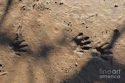 Footprints2 Art Print by Laurianna Taylor