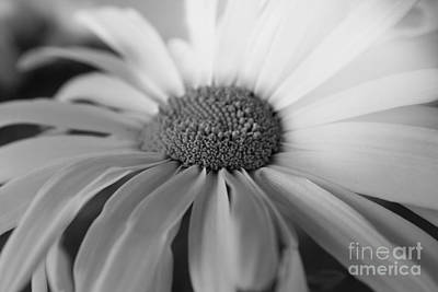 Photograph - For My Daisy by Deena Otterstetter