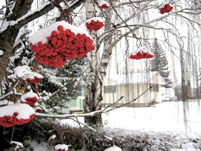 Winter Photograph - For The Birds by Shirley Sirois