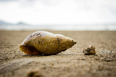 Beach Photograph - For The Love Of Shells  by Rena  Lopez