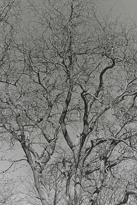 Photograph - For The Love Of Trees - 2 - Monochrome  by Hany J