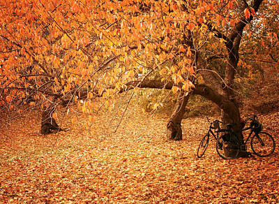 Fall Foliage New York Wall Art - Photograph - For Two - Autumn - Central Park by Vivienne Gucwa