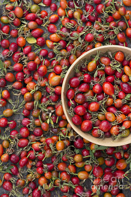 Wooden Bowls Photograph - Foraged Rose Hips by Tim Gainey