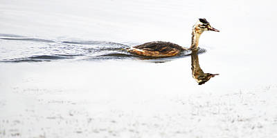 Photograph - Foraging Bird by Yue Wang