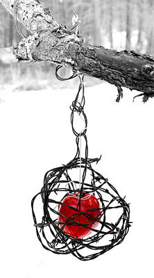 Barbed Wire Photograph - Forbidden Fruit by Aaron Aldrich