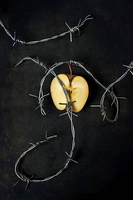 Barbwire Photograph - Forbidden Fruit by Joana Kruse