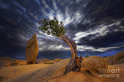 Nada Mas Llc Photograph - Forces Of Nature by Marco Crupi