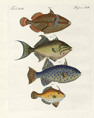 Triggerfish Drawing - Foreign Fish by Splendid Art Prints