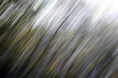 Photograph - Forest Abstract by Beverly Stapleton