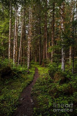 Forest Alder Path Art Print by Mike Reid