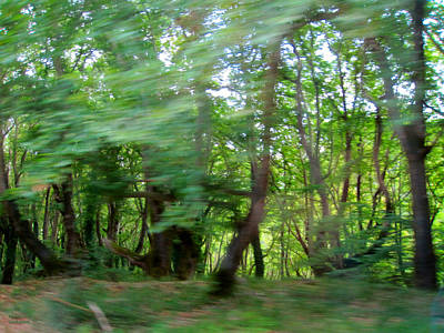 Photograph - Forest  by Alexandros Daskalakis