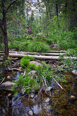 Photograph - Forest And Stream by Dave Garner