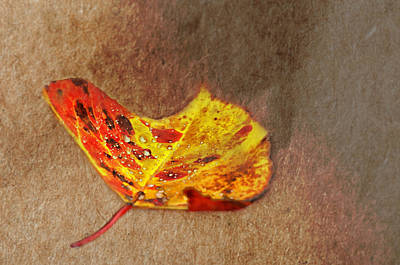 Falling Leaf Photograph - Forest Art by Susan Capuano