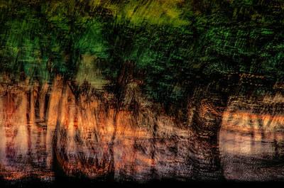Vegetation Wall Art - Photograph - Forest At Sundown by Phyllis Clarke
