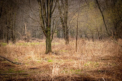 Photograph - Forest Awakening by Gene Sherrill