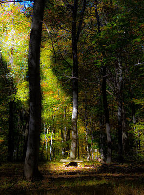 Photograph - Forest Bench by Jonny D