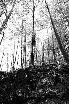 Forest Black And White 7 Art Print by Falko Follert