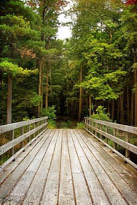 Photograph - Forest Bridge by Christina Rollo