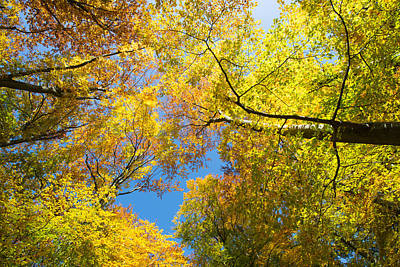 Photograph - Forest Canopy - Trees With Green Yellow And Orange Leaves by Matthias Hauser